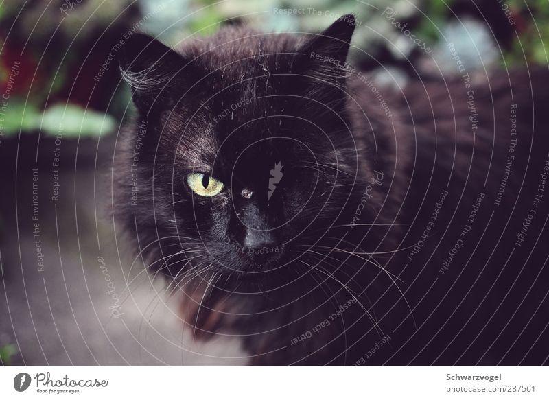 Arrrrr! Katze Tier Auge authentisch Vergänglichkeit Haustier Wunde Behinderte verlieren