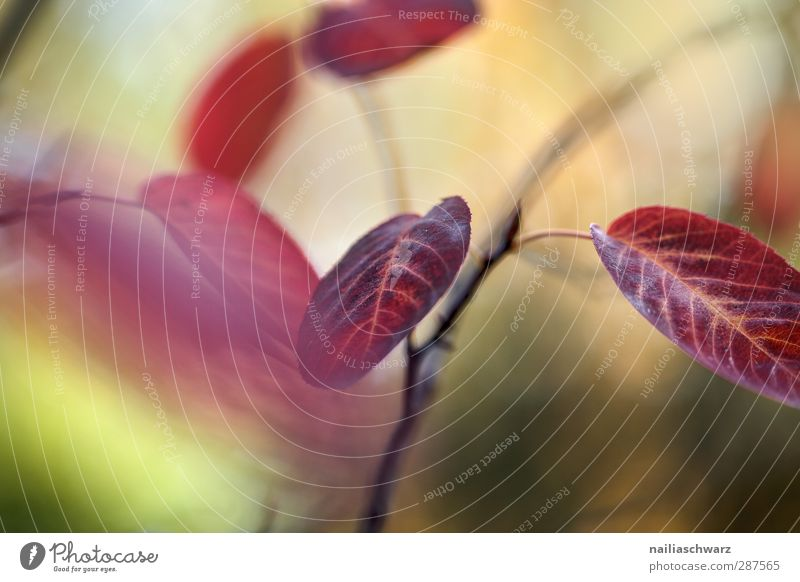 Herbstfarben Natur grün schön Pflanze Baum rot Farbe Blatt Wald gelb Umwelt natürlich Park glänzend leuchten