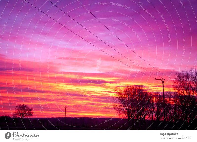 Roter Strom Energiewirtschaft Strommast Umwelt Natur Landschaft Pflanze Winter Baum Sträucher Feld Endzeitstimmung Abenddämmerung Licht Morgendämmerung