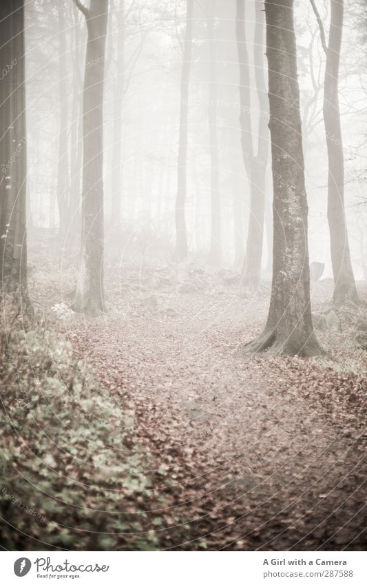 silent winter Natur Pflanze Blatt ruhig Winter Landschaft Wald Umwelt hell Nebel schlechtes Wetter