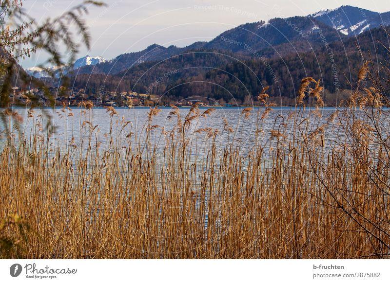 Gebirgssee, Schilf, Berge Tourismus Ausflug Berge u. Gebirge wandern Frühling Herbst Pflanze Wald Hügel Alpen Seeufer Einsamkeit Ferien & Urlaub & Reisen Glaube