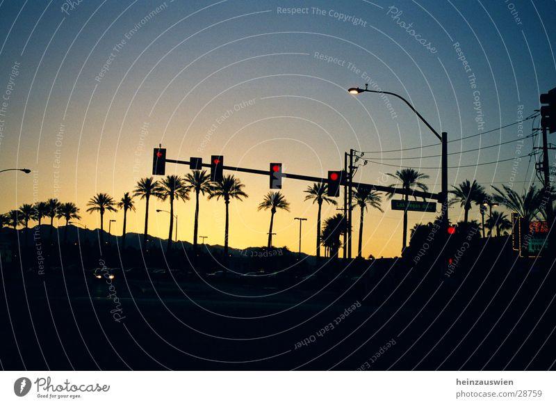Las Vegas Boulevard Ampel Sonnenuntergang Straße Himmel Wolkenloser Himmel Schönes Wetter Klarer Himmel Silhouette Palme Allee Baumreihe Hintergrund neutral