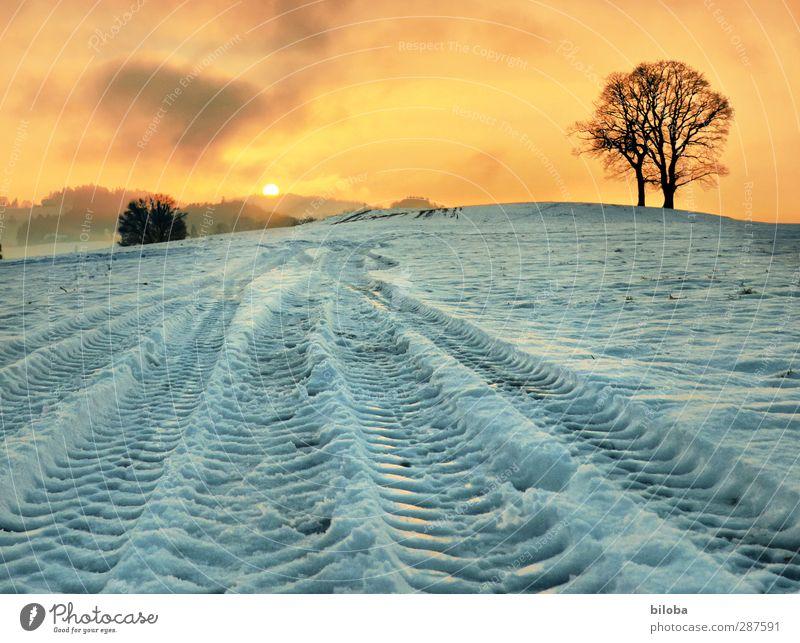 Spuren im Schnee Landschaft Pflanze Sonnenaufgang Sonnenuntergang Winter Baum Feld Gefühle Stimmung Glück Hoffnung Schneefall Traktorspur Farbfoto Außenaufnahme