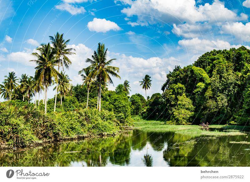 idylle Ferien & Urlaub & Reisen Tourismus Ausflug Abenteuer Ferne Freiheit Umwelt Natur Landschaft Himmel Wolken Pflanze Baum Sträucher Blatt Urwald Flussufer