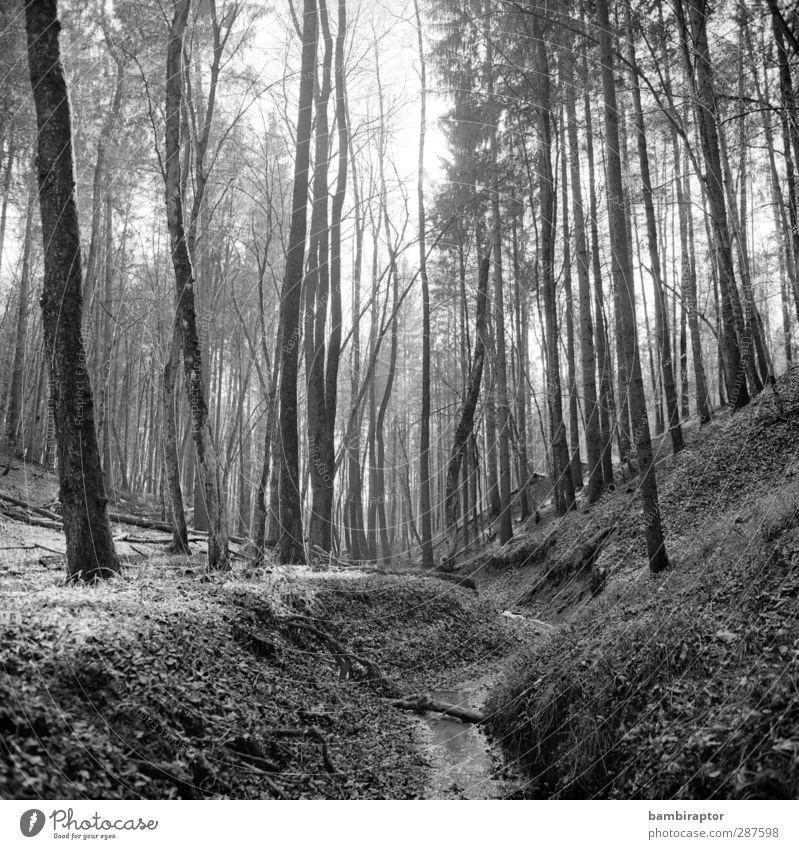 Vor 9 Monaten ruhig Winter Umwelt Natur Landschaft Erde Schnee Baum Wald hell kalt Ast dünn Naturwuchs Schwarzweißfoto Außenaufnahme Menschenleer Tag Licht