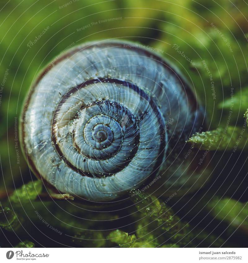 weiße Schnecke auf dem Boden Riesenglanzschnecke Tier Wanze Insekt klein Panzer Spirale Natur Pflanze Garten Außenaufnahme zerbrechlich niedlich