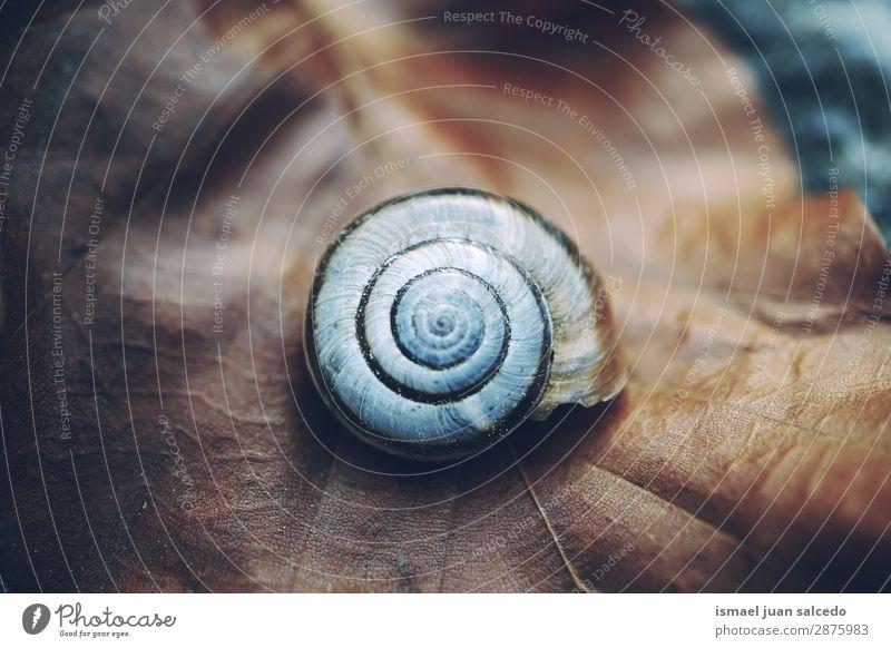 Schnecke in der Natur Riesenglanzschnecke Tier Wanze weiß Insekt klein Panzer Spirale Pflanze Garten Außenaufnahme zerbrechlich niedlich Beautyfotografie