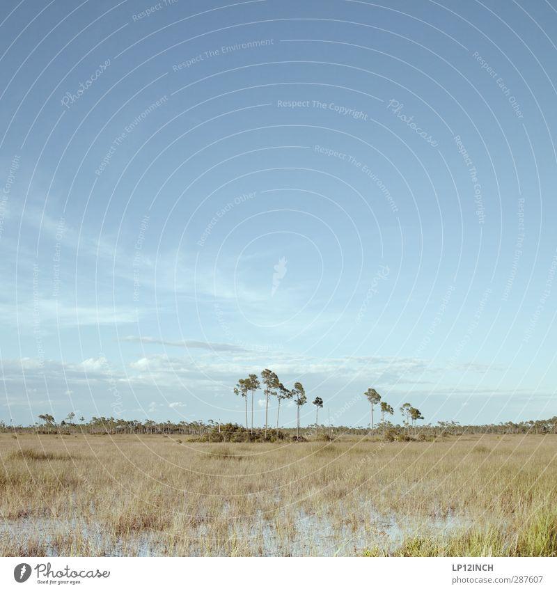 Subtropical. XXXIV Natur Ferien & Urlaub & Reisen Wasser Baum Erholung Landschaft ruhig Tier Ferne Umwelt Gras Tourismus Klima Ausflug Schönes Wetter Abenteuer