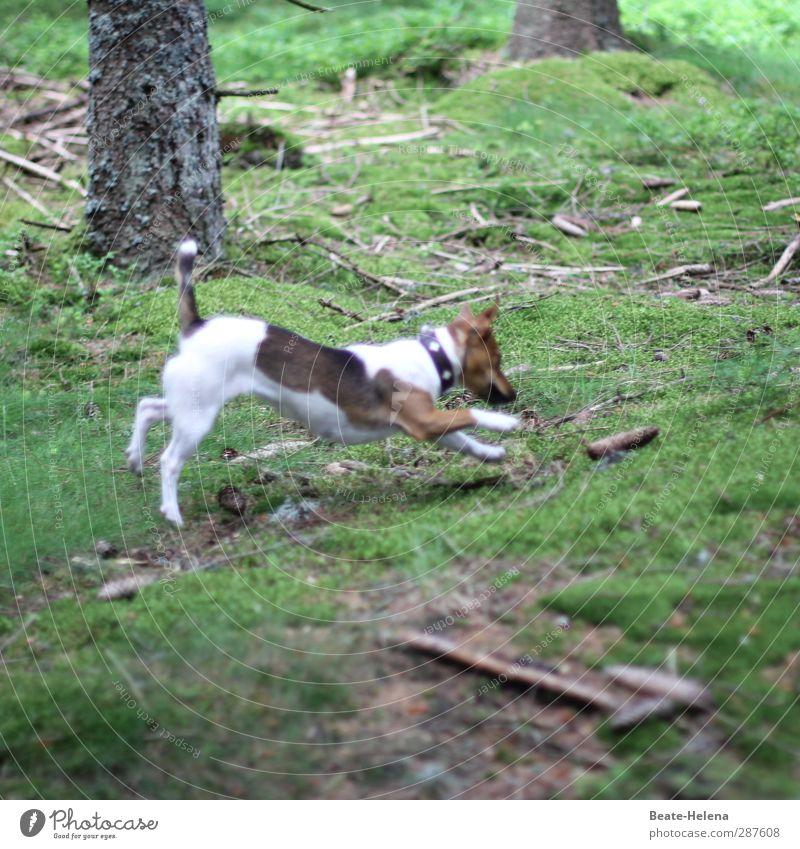 Das hat Hand und Fuß | Meine Pfötchen zeig' ich gerne her Hund Natur weiß Sommer Baum Landschaft Tier Wald Sport Spielen springen braun Freizeit & Hobby wild
