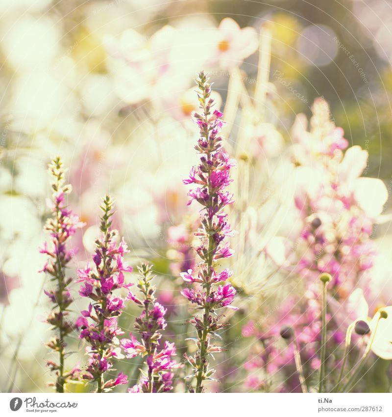 endlich volljährig - das hat Hand und Fuß Natur Sommer Pflanze Tier Umwelt Wachstum Sträucher Blühend Duft