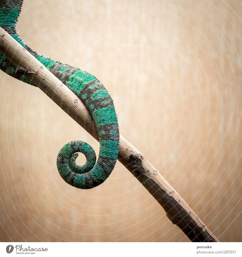 das hat hand und fuß | und... schön Tier Wildtier Zoo türkis exotisch gestreift Schwanz Echsen Schuppen Chamäleon
