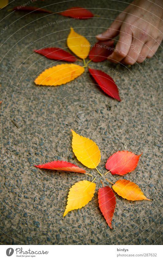 schöne Sachen machen Natur schön Hand rot Farbe Freude Blatt gelb Wärme Herbst Kunst natürlich orange Fröhlichkeit leuchten ästhetisch