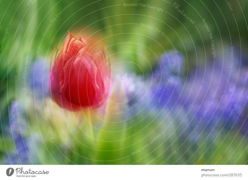 ich träum vom Frühling Natur Pflanze Blume Tulpe Blüte Frühlingsgefühle Frühlingsblume Frühlingsfarbe Frühlingsblumenbeet Frühlingstag Blühend Wachstum