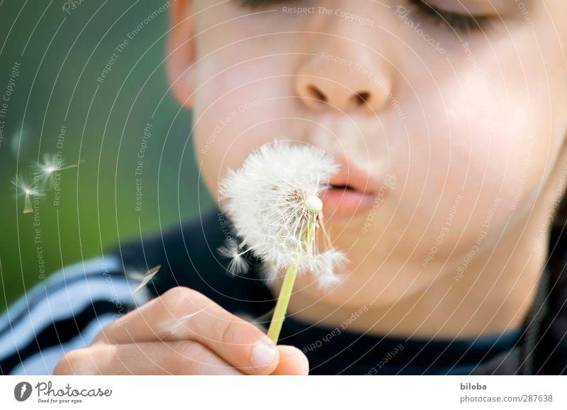 Das hat hand und Fuß Mensch Kind grün weiß Hand Freude schwarz Gesicht Kindheit Mund Löwenzahn blasen 3-8 Jahre