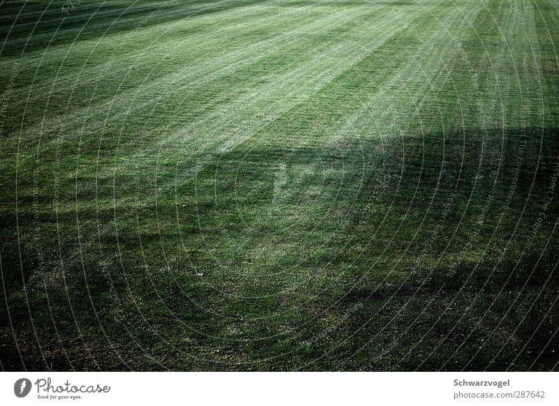 grass is green Natur grün Pflanze Landschaft Umwelt Wiese Gras Feld Spuren Sport-Training Symmetrie Gartenarbeit stagnierend Grünpflanze Schattenspiel