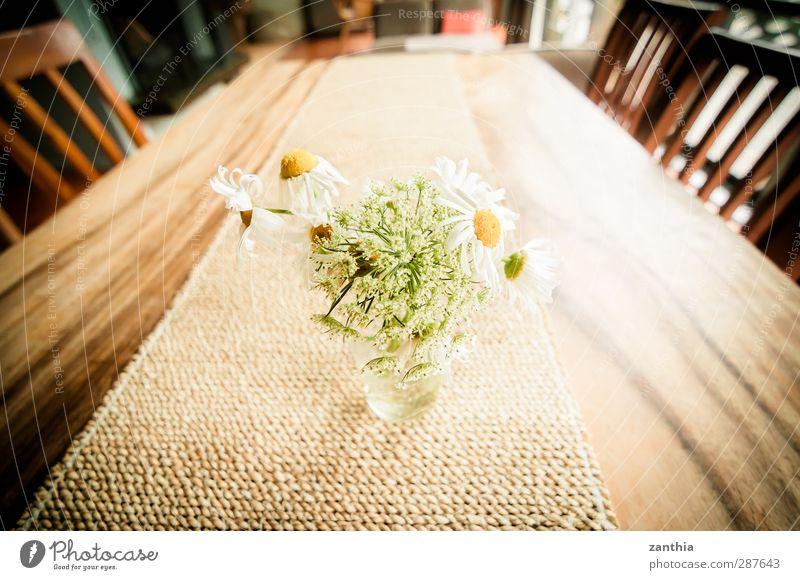 Magarithen weiß Pflanze Freude Blume Erholung Ferne Leben Glück Stil hell braun Raum Glas Zufriedenheit Häusliches Leben Idylle