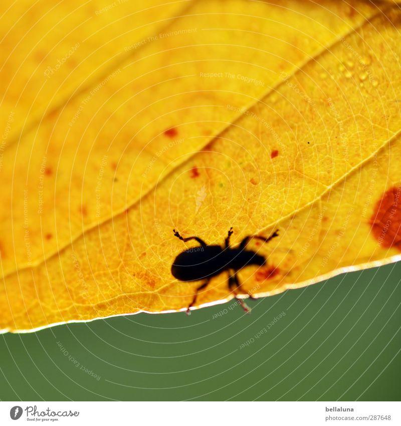 Das hat Hand und Fuß | ... Natur Wasser grün Pflanze Blatt Tier schwarz Wald gelb Wiese Herbst Garten braun Park Wildtier sitzen
