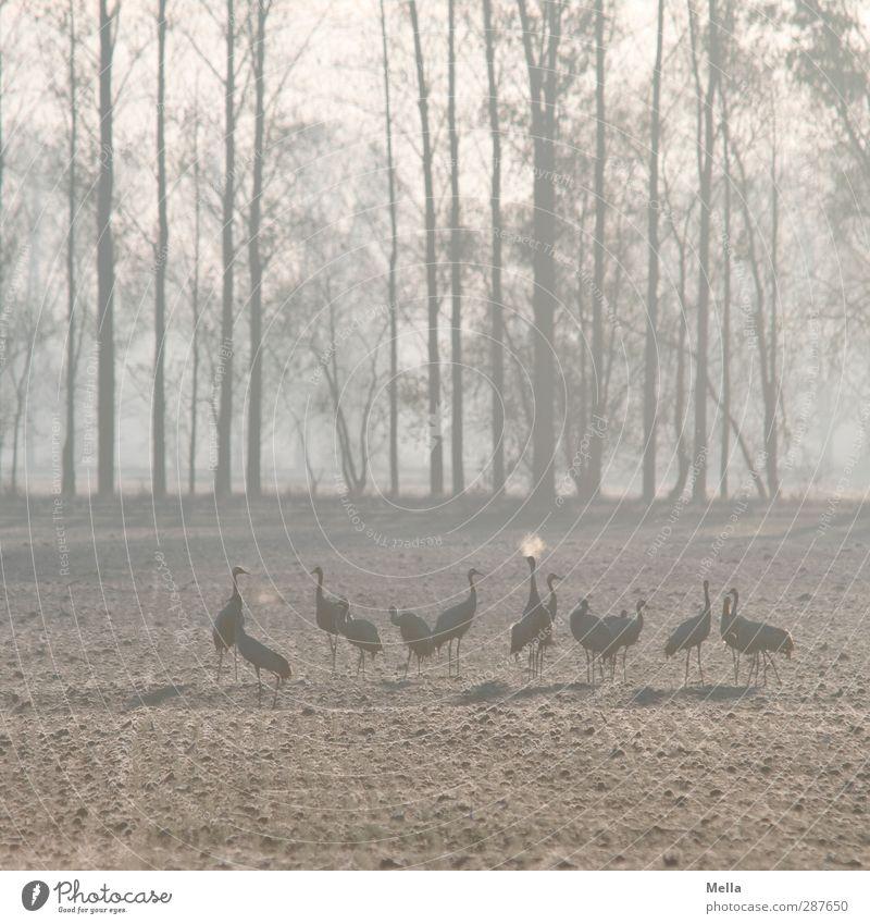Der Odem Natur blau Baum Tier Winter Landschaft Umwelt Wiese kalt Herbst Vogel Zusammensein natürlich Feld stehen Tiergruppe