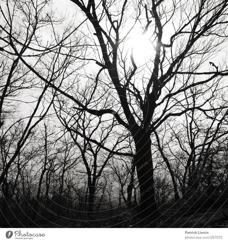 Fake Plastic Trees Natur Pflanze Baum Sonne Winter Landschaft Wald Umwelt Senior Luft Kraft Wachstum Schönes Wetter Beginn Kommunizieren Perspektive