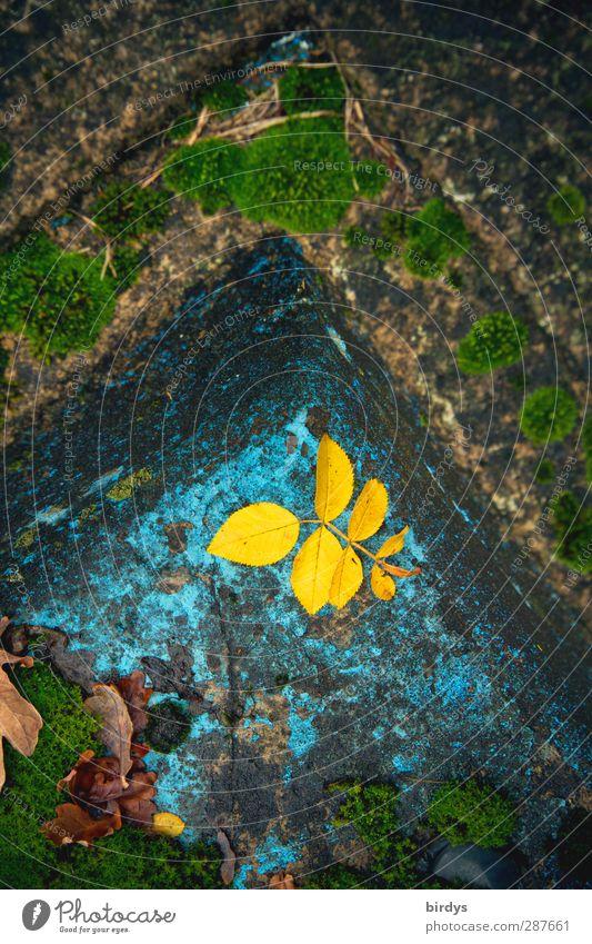 Farbschimmer in Tristesse alt Blatt Einsamkeit gelb Herbst Senior Traurigkeit Garten Zeit authentisch leuchten Ecke Wandel & Veränderung Vergänglichkeit Verfall