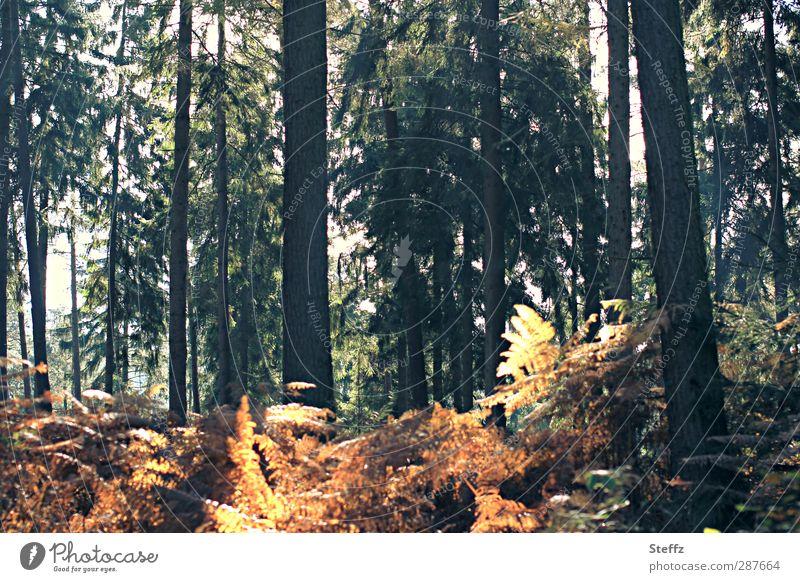 Waldfarben Herbstwald Lichteinfall Farne Farnblätter Gegenlicht Waldstimmung Waldrand grün gelb orange Lichtstimmung Novemberstimmung Herbstlicht dunkelgrün