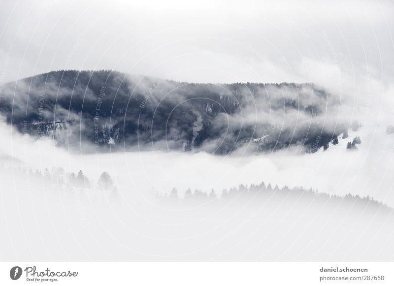 Schwarz( weiß )Wald Winter Schnee Winterurlaub Berge u. Gebirge wandern Umwelt Natur Landschaft Wolken Klima Wetter schlechtes Wetter Wind Nebel Eis Frost