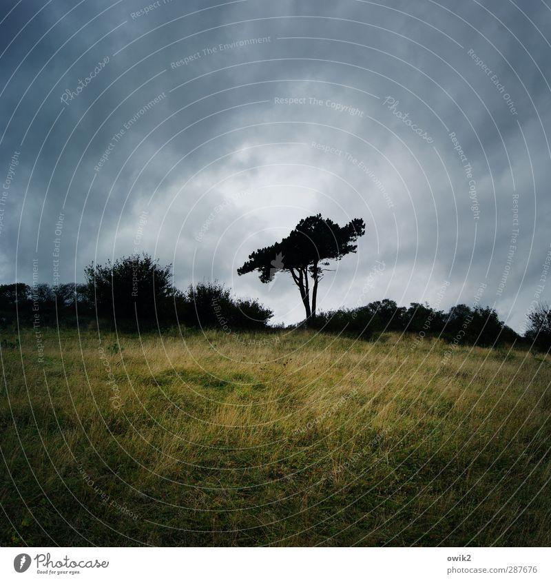 Stillstand Himmel Natur Pflanze Baum Einsamkeit Wolken ruhig Landschaft Umwelt dunkel Gras Traurigkeit Horizont Deutschland Wetter Klima