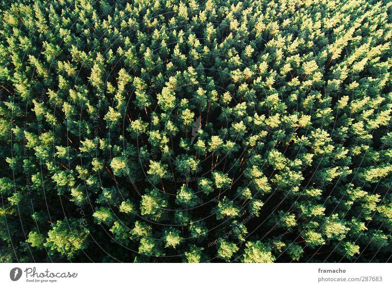 Wald Natur Sommer Pflanze Baum Tier Landschaft Umwelt oben Klima wandern frei Schönes Wetter Höhenangst Umweltschutz Klimawandel