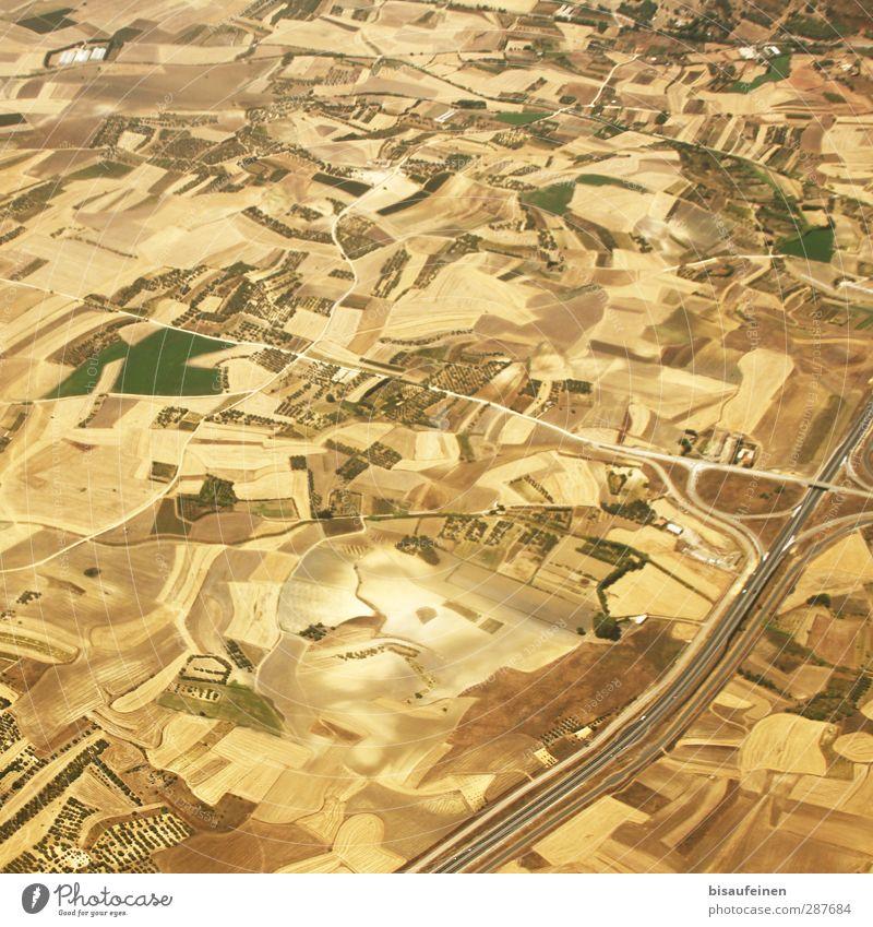 Flickenteppich in dezenten Gelb- und Brauntönen... Natur grün Sommer Landschaft schwarz gelb Wärme Wiese braun orange Feld Schönes Wetter Landwirtschaft