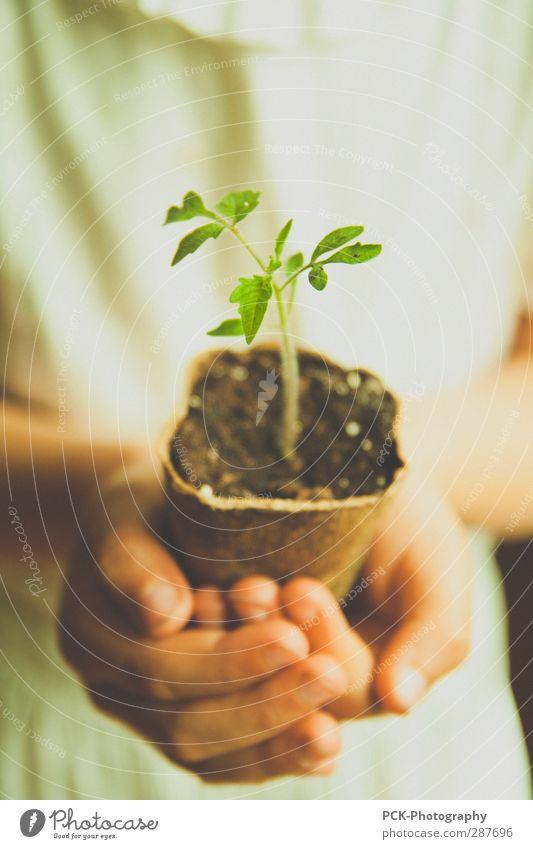 Wachstumspflänzchen grün Hand Pflanze Erde Wachstum Zukunft stoppen Gemüse behüten wiegen Grüner Daumen