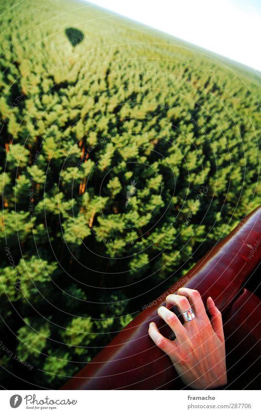 Fear Ausflug Abenteuer Ferne Freiheit Sommer feminin Hand Finger 1 Mensch Umwelt Natur Landschaft Pflanze Tier Luft Schönes Wetter Wald fliegen träumen