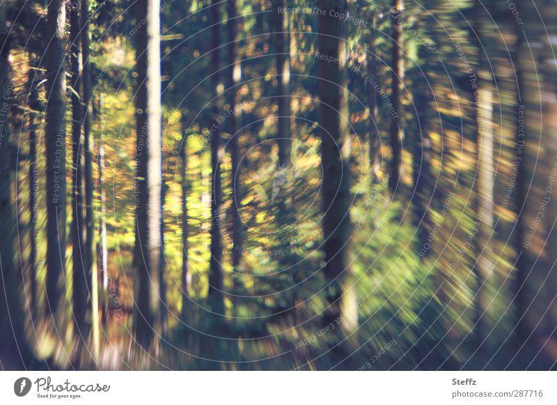 Waldimpression mit Bewegungsunschärfe Herbstwald Impression Waldbäume Bäume anders schwungvoll verwischt Schwung Waldrand Waldboden Herbstgefühl braun