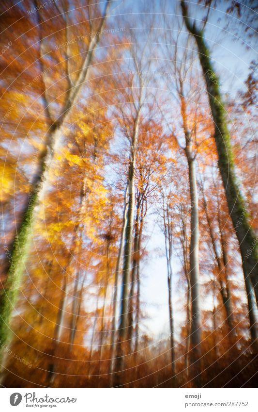 wannabe lensbaby Himmel Natur Pflanze Baum Wald Umwelt Herbst natürlich Schönes Wetter Verzerrung