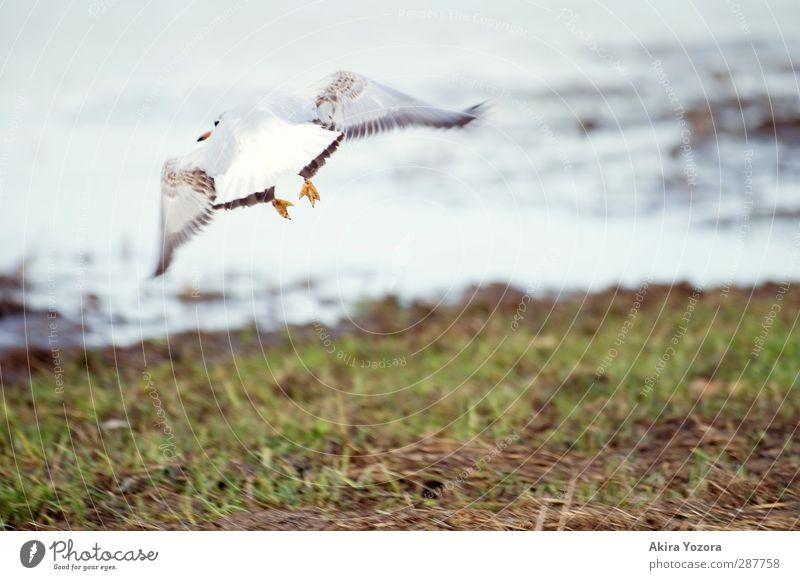 Abflug Natur Ferien & Urlaub & Reisen Wasser grün weiß Tier Landschaft schwarz Gras grau Freiheit Vogel braun orange fliegen Erde
