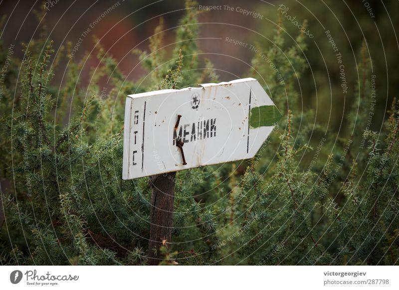 Ferien & Urlaub & Reisen Pflanze grün Sommer Ferne Umwelt Berge u. Gebirge Frühling Holz Metall Tourismus Schilder & Markierungen Sträucher wandern Ausflug
