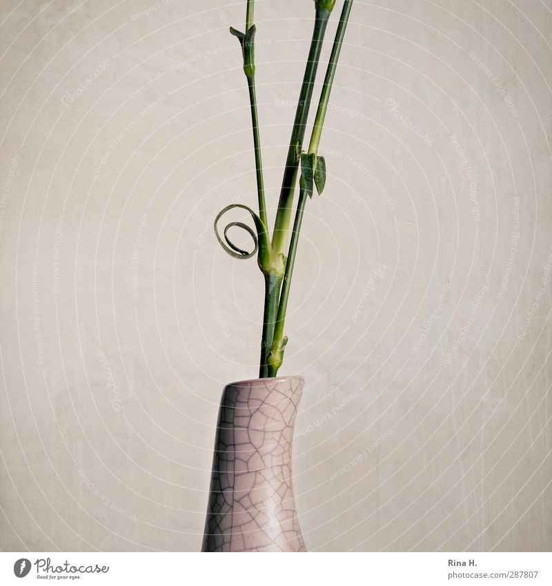 Kringel Blume Blumenstängel Vase hell Spirale Durchschnitt geschnitten Stengel Gedeckte Farben Studioaufnahme Menschenleer Textfreiraum links
