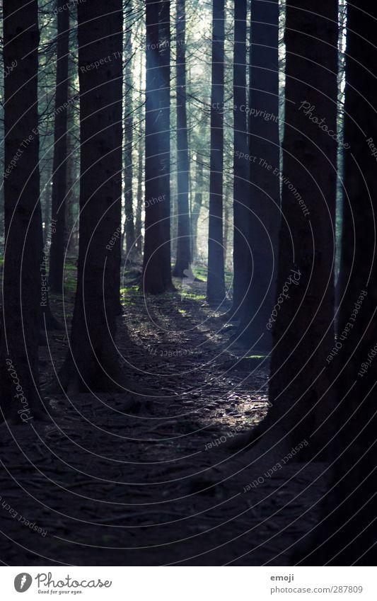 Forest Gump Natur Pflanze Baum Wald Umwelt dunkel Erde bedrohlich Baumstamm