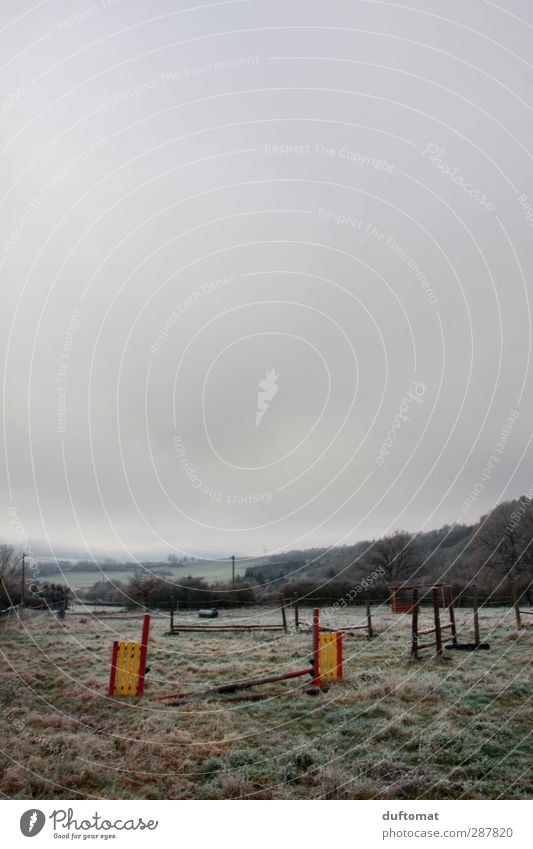 Fränkische Prärie Reiten Reitsport Natur Landschaft Nebel Wiese Feld grau Einsamkeit Sport Gedeckte Farben Textfreiraum oben Dämmerung