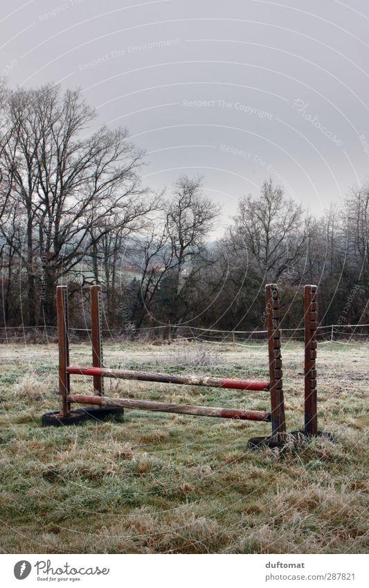 Pferdchen lauf Gallopp Natur Landschaft Wiese Sport springen Feld Nebel schlechtes Wetter Reitsport Reiten