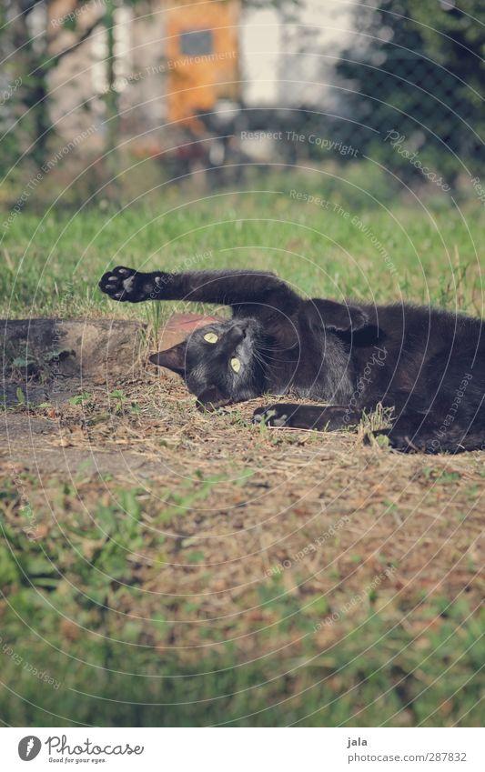 spielwiese Katze Pflanze Tier Wiese Gras Spielen Glück Garten Sträucher Haustier