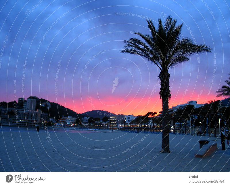 Mallehimmel Spanien Mallorca Strand Palme Palma de Mallorca Sandstrand mehrfarbig Morgen violett Europa Sonne Himmel Abenddämmerung Morgendämmerung