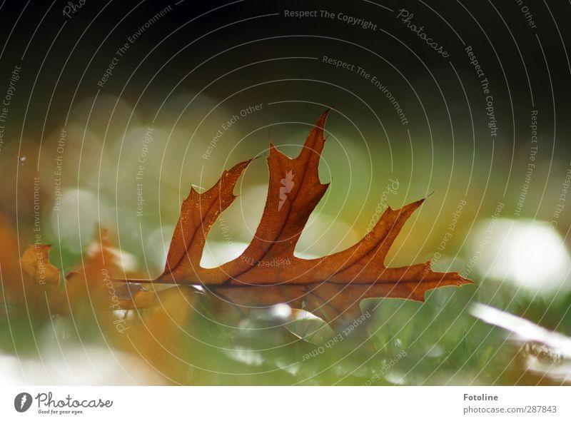 Der Herbst, der Herbst, der Herbst ist da... Umwelt Natur Pflanze Gras Blatt Wiese hell natürlich braun herbstlich Herbstlaub Lampe Farbfoto mehrfarbig