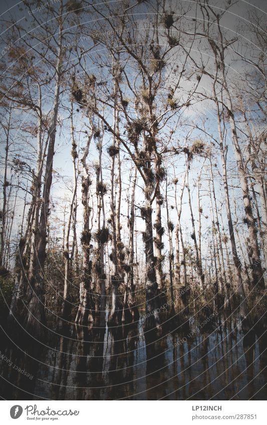 BIG Cypress. XXXVIII Natur Baum Tier Landschaft Umwelt außergewöhnlich Tourismus ästhetisch Abenteuer bedrohlich Fluss USA gruselig Umweltschutz