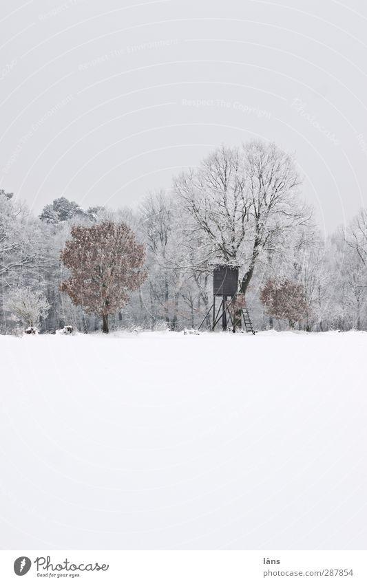 Halali Jagd Winter Schnee Umwelt Natur Landschaft Wetter Eis Frost Baum Wald Erwartung kalt Vergänglichkeit Wandel & Veränderung Waldrand Hochsitz beobachten