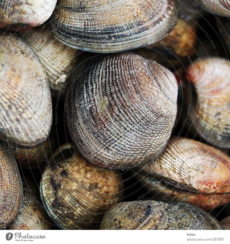 Lebenslinien Schönes Wetter Küste Strand Wildtier Muschel Tiergruppe rund Idylle Natur ruhig schön Häusliches Leben Zusammenhalt mehrfarbig Verschiedenheit