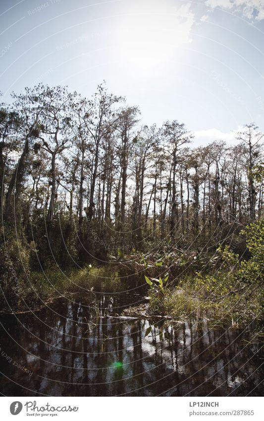 Alli Gator. XXXIX Natur Ferien & Urlaub & Reisen Wasser Sommer Pflanze Baum Tier Landschaft Ferne Umwelt Gras außergewöhnlich Angst Wildtier wandern Tourismus