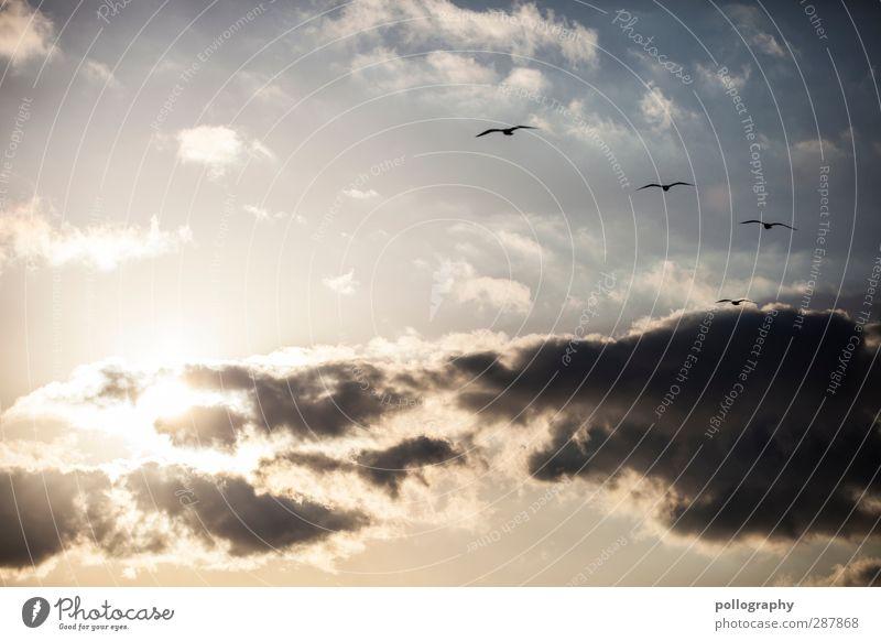 feel free Himmel Natur Sommer Tier Wolken Erholung Zusammensein Wetter Wind Klima Schönes Wetter Zusammenhalt Möwe Verbundenheit Schwarm Sympathie