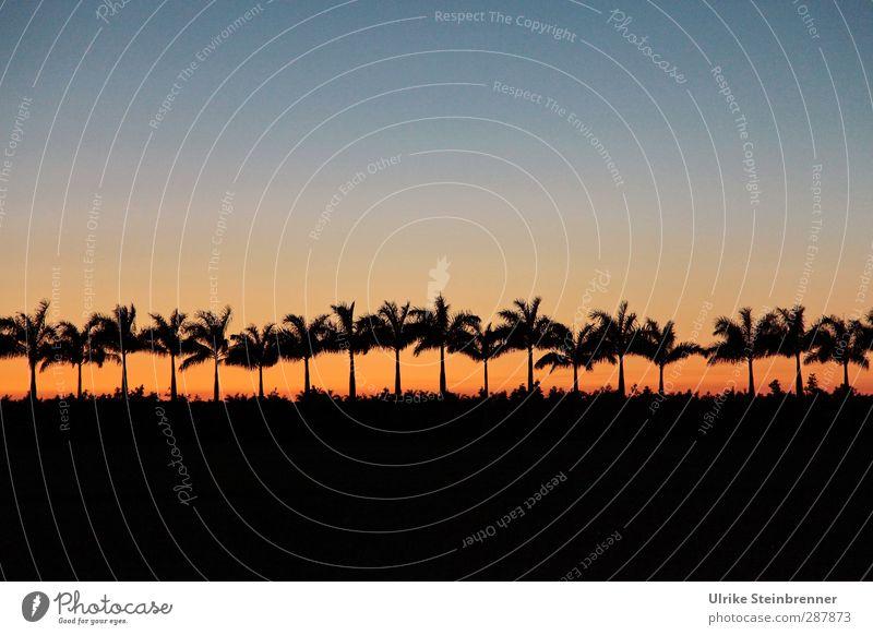 Noch 18 Palmen bis Weihnachten Ferien & Urlaub & Reisen Tourismus Ferne Umwelt Natur Landschaft Pflanze Himmel Wolkenloser Himmel Frühling Baum Nutzpflanze