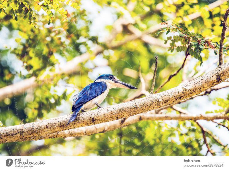 blauer könig | kingfisher Tierporträt Unschärfe Kontrast Licht Tag Menschenleer Detailaufnahme Nahaufnahme Außenaufnahme Farbfoto Fernweh Tierliebe Umweltschutz