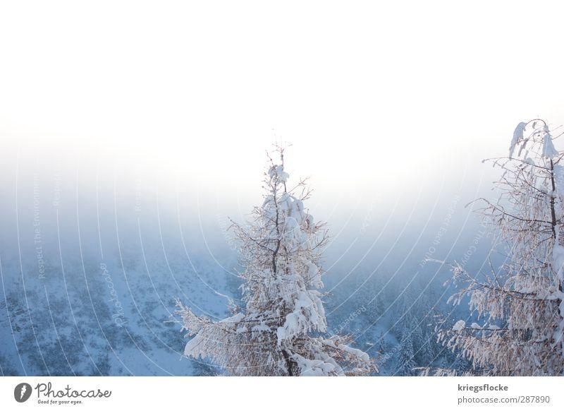 ***Winterzauber*** Ausflug Freiheit Schnee Winterurlaub Berge u. Gebirge wandern Klettern Bergsteigen Natur Landschaft Pflanze Urelemente Nebel Baum Alpen blau